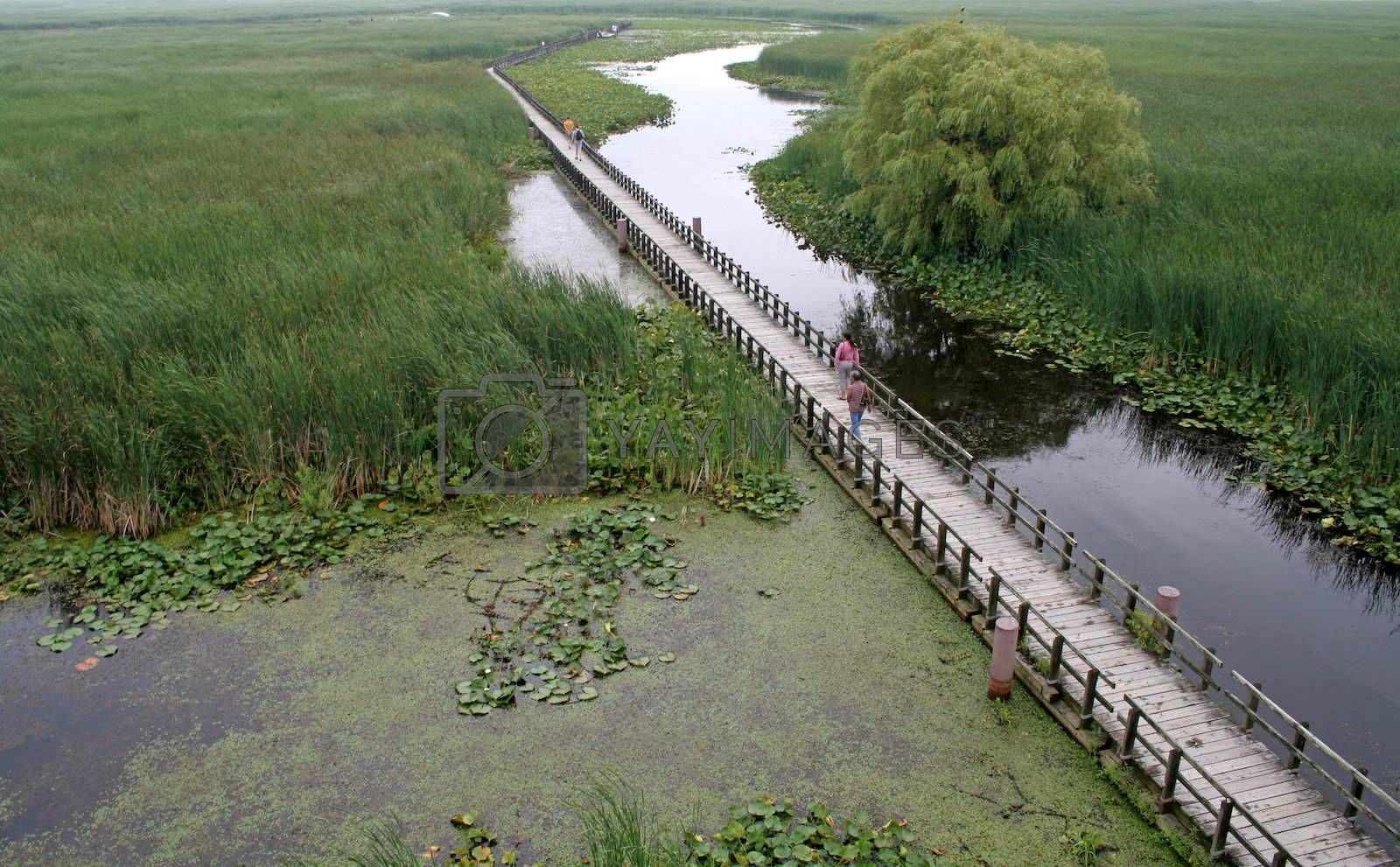 The boardwalk in the marsh at Point Pelee National Park, in Ontario, Canada.