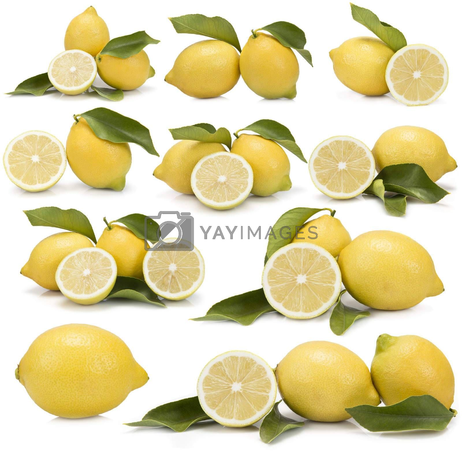 Great set of photographs of lemons with leaves isolated over a white background