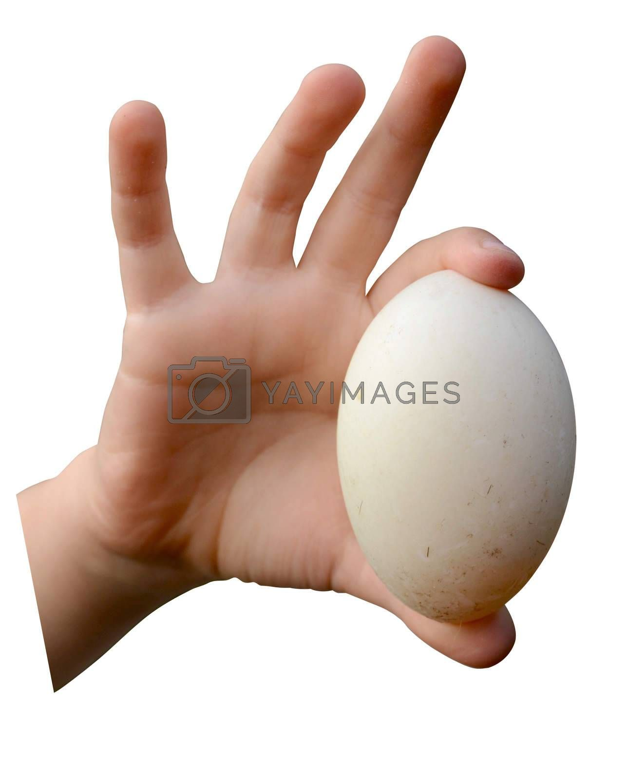 Isolation Of A Child's Hand Holding A Dirty Farm Egg