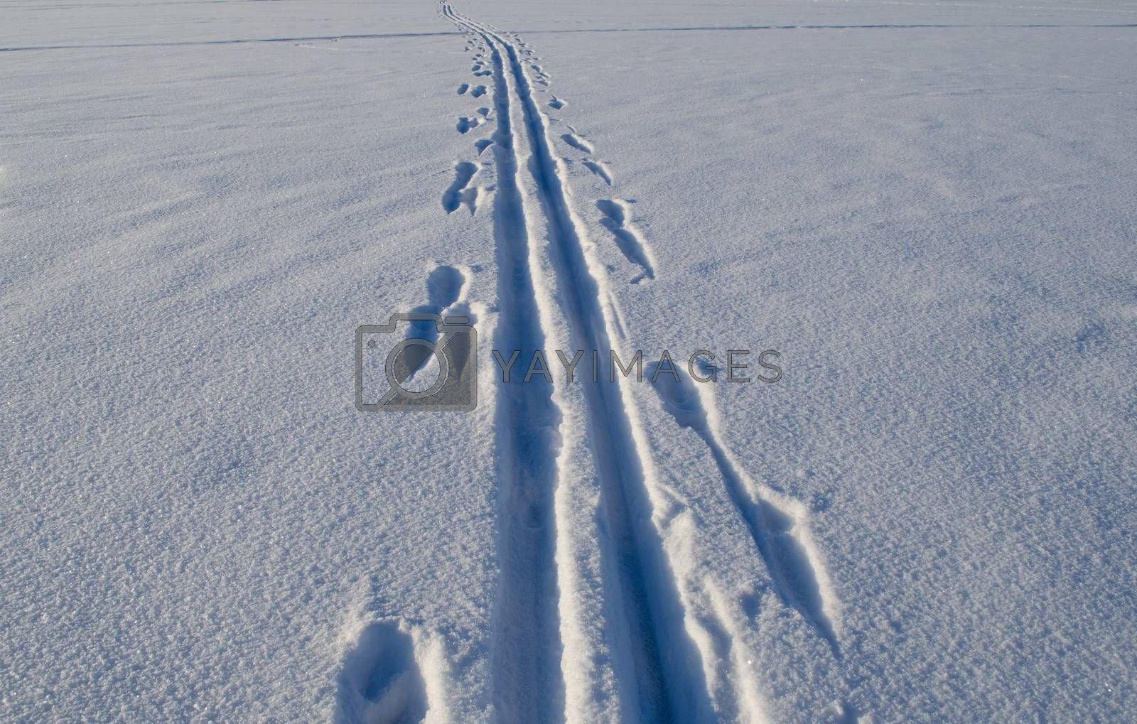 Ski tracks marks left on frozen lake snow in winter. Active recreation in nature.