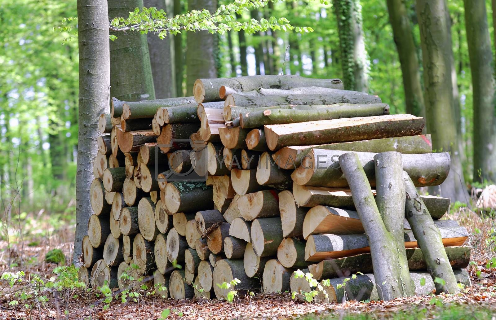 stack of fire wood in the forest