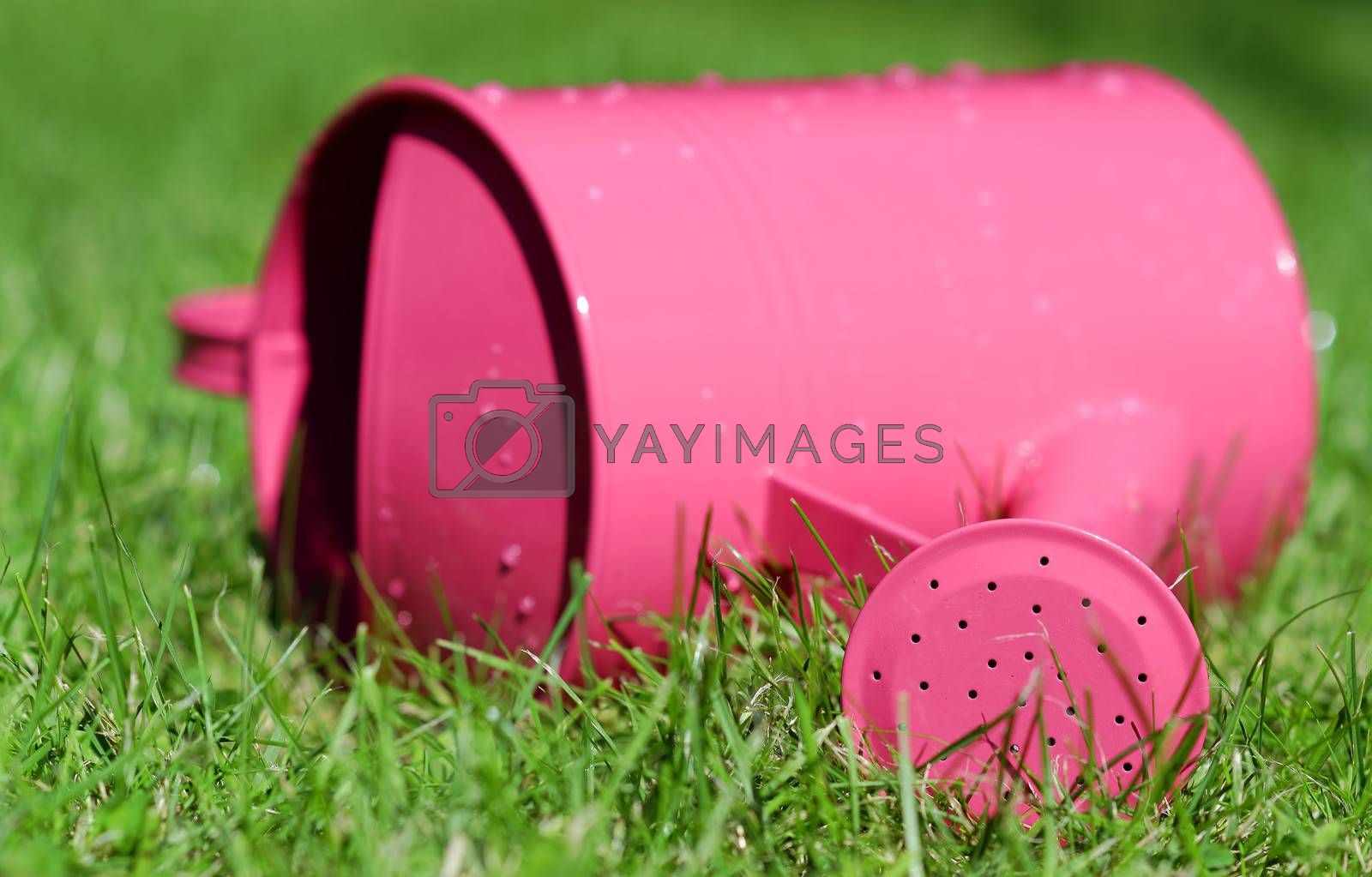 a watering can lying in the grass