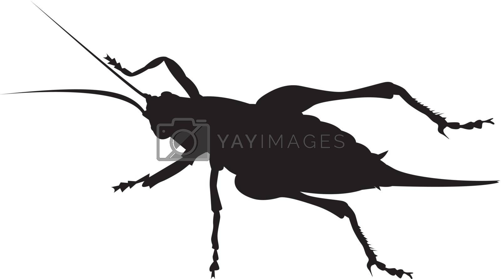 Illustration of an cricket silhouette on white background.