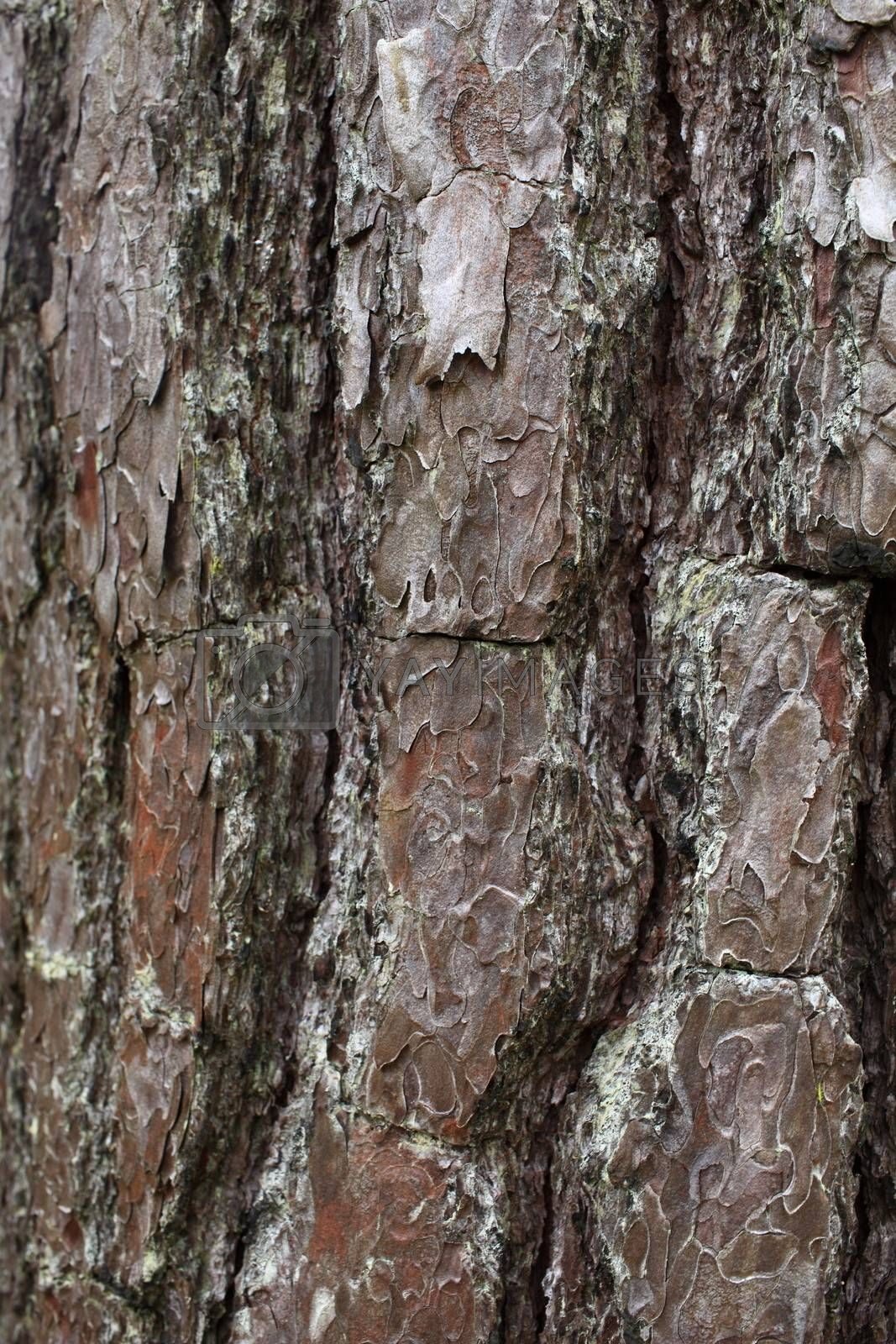 Bark of tree texture. Shielded by nature.