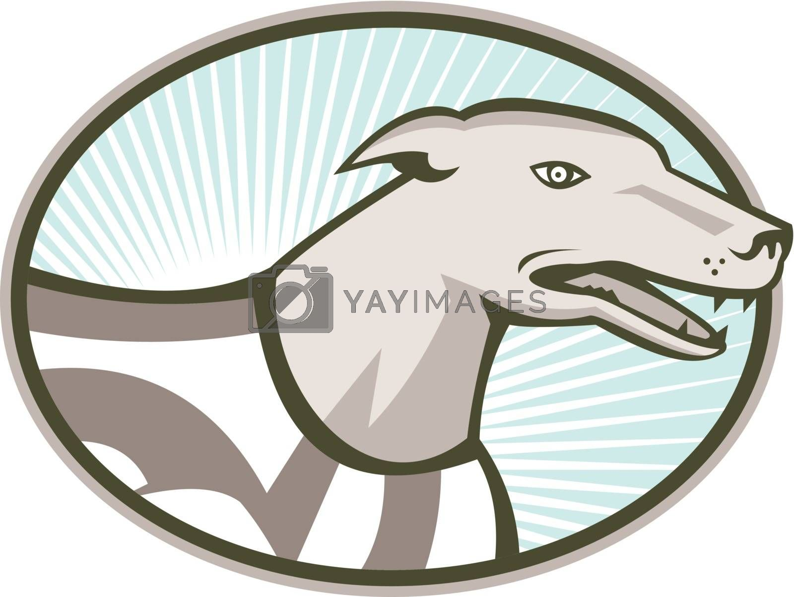 Illustration of a greyhound dog side view set inside oval done in retro style.