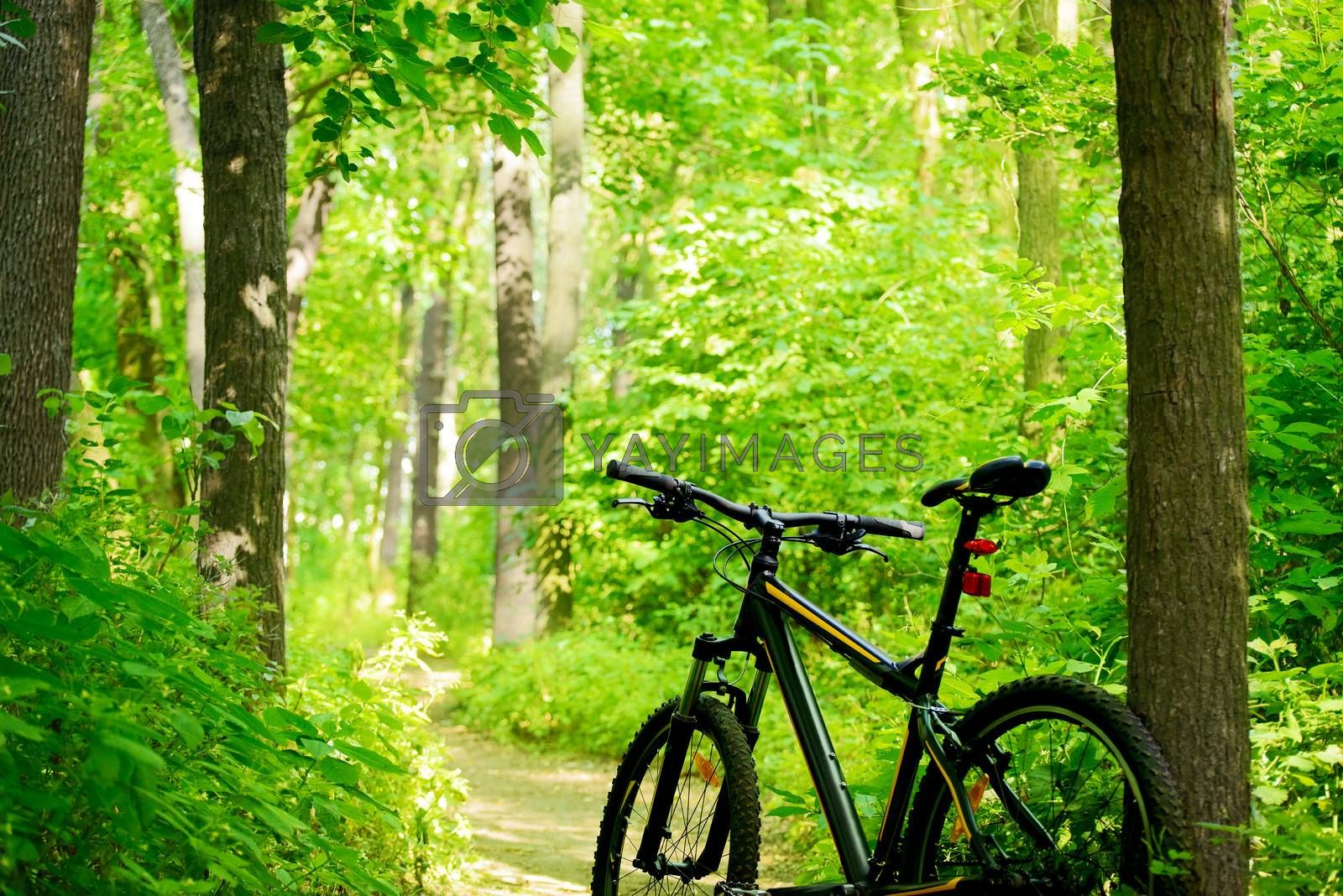 Royalty free image of Mountain Bike on the Trail in the Forest by maxpro