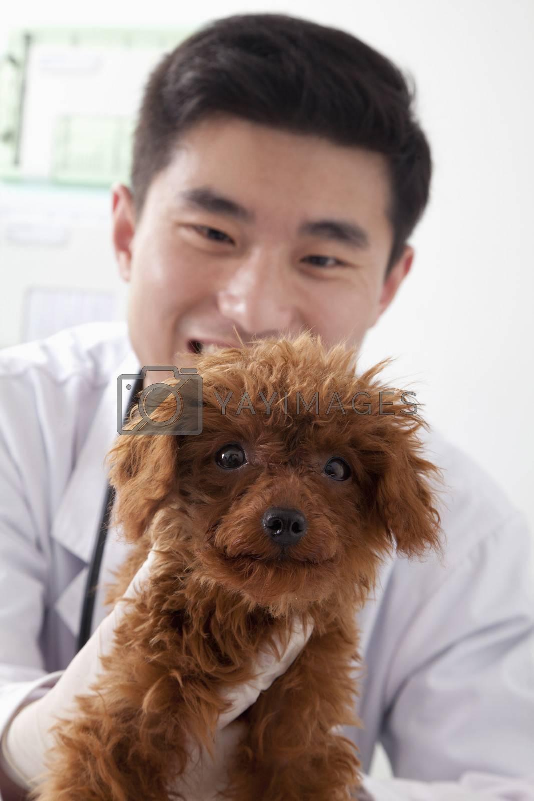 Veterinarian holding dog in office