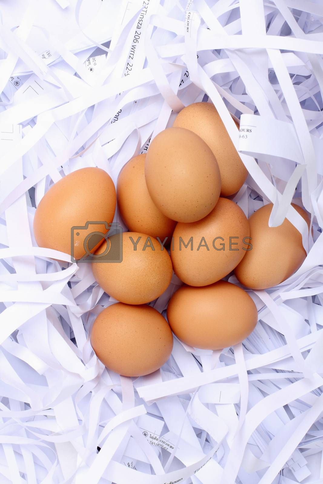 eggs on papers cut background