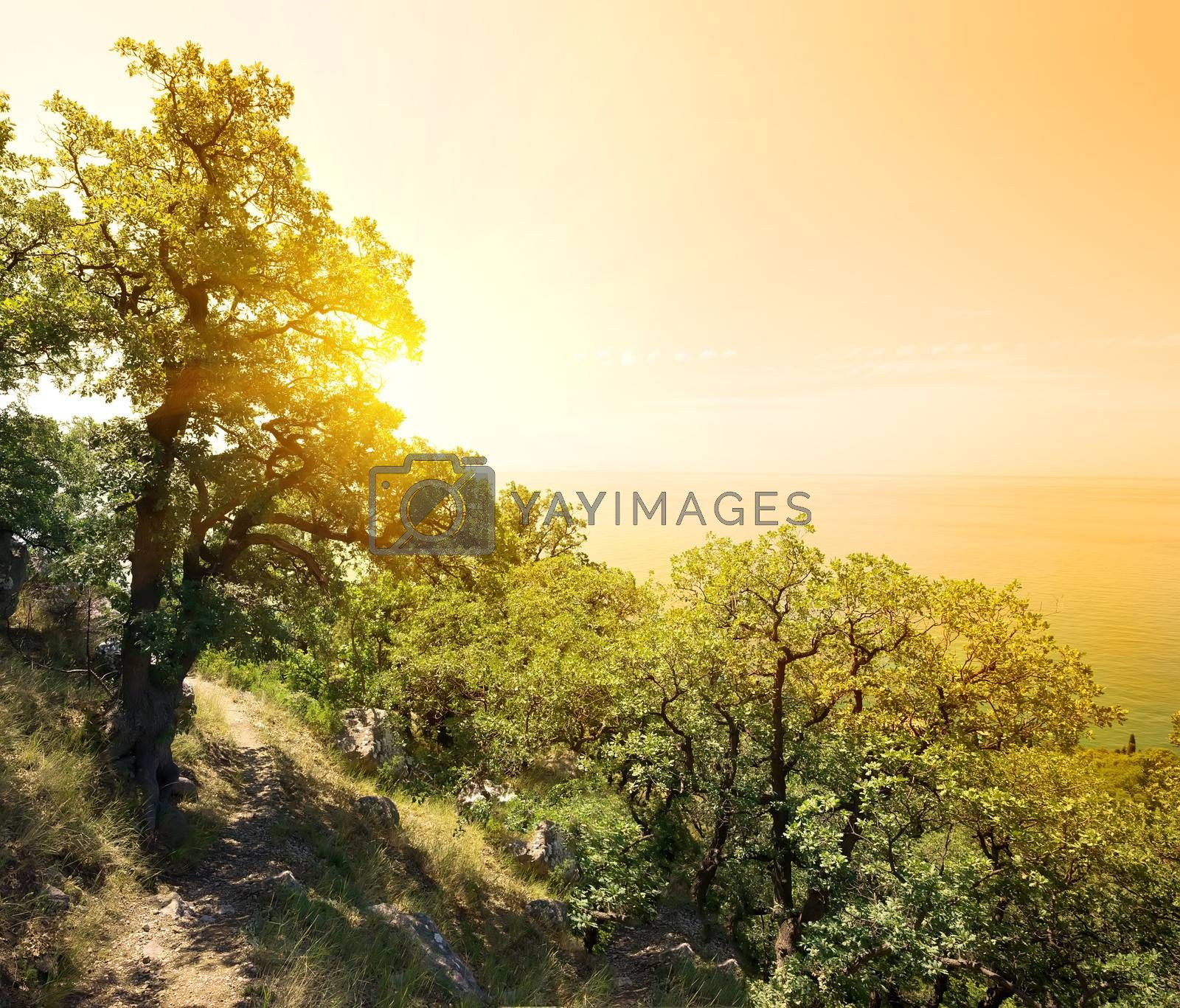 Sunny landscape with green trees in mountains