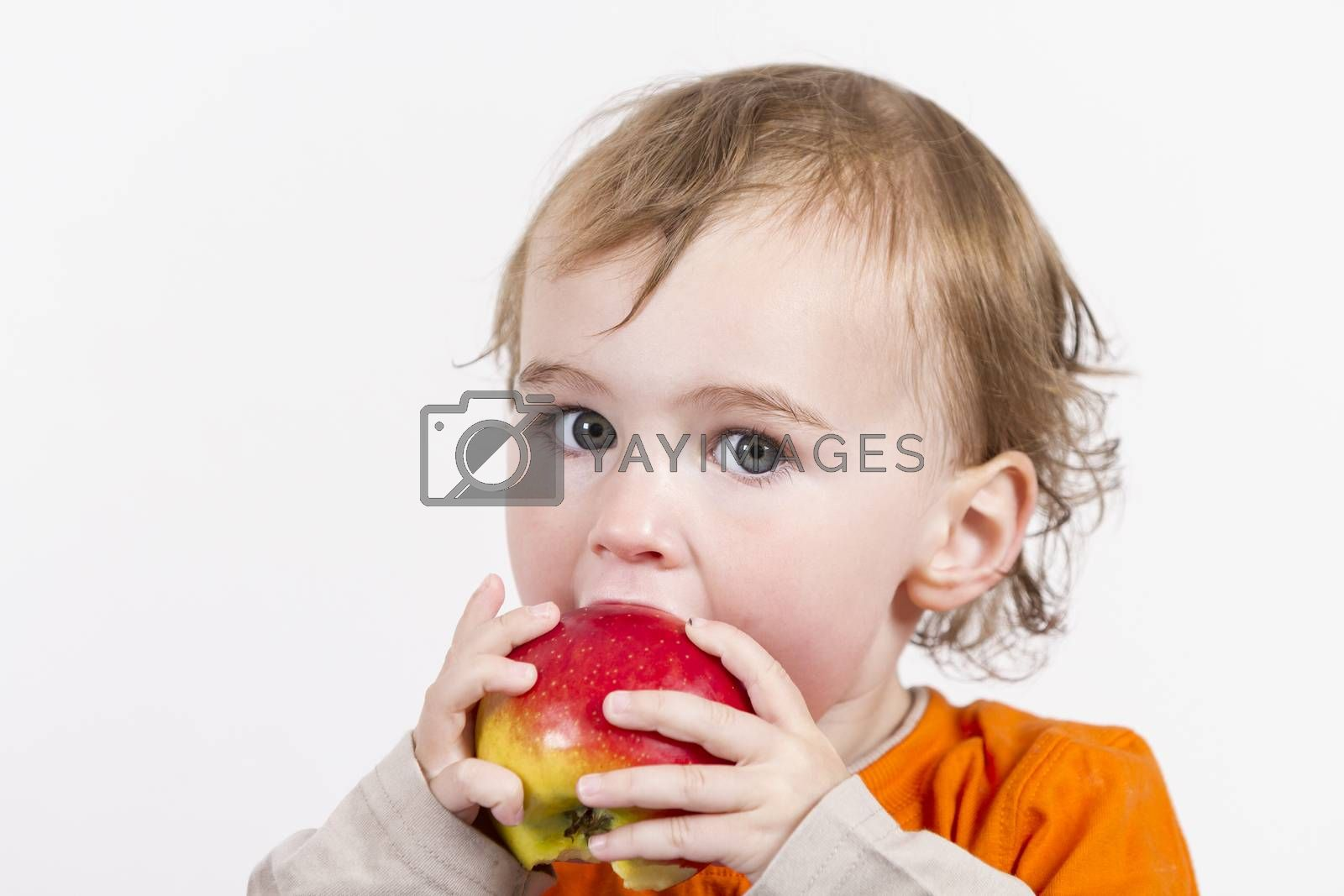 young child holding and eating red apple. horizontal image