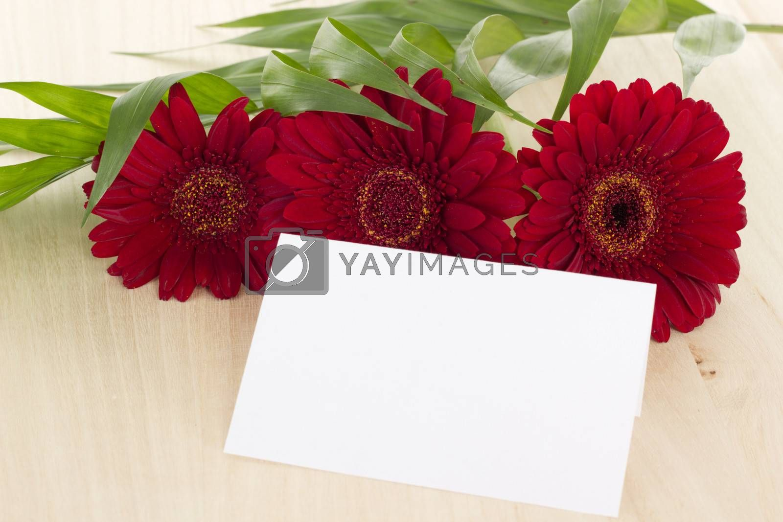 Wishing Happy Birthday with these beautiful red gerberas