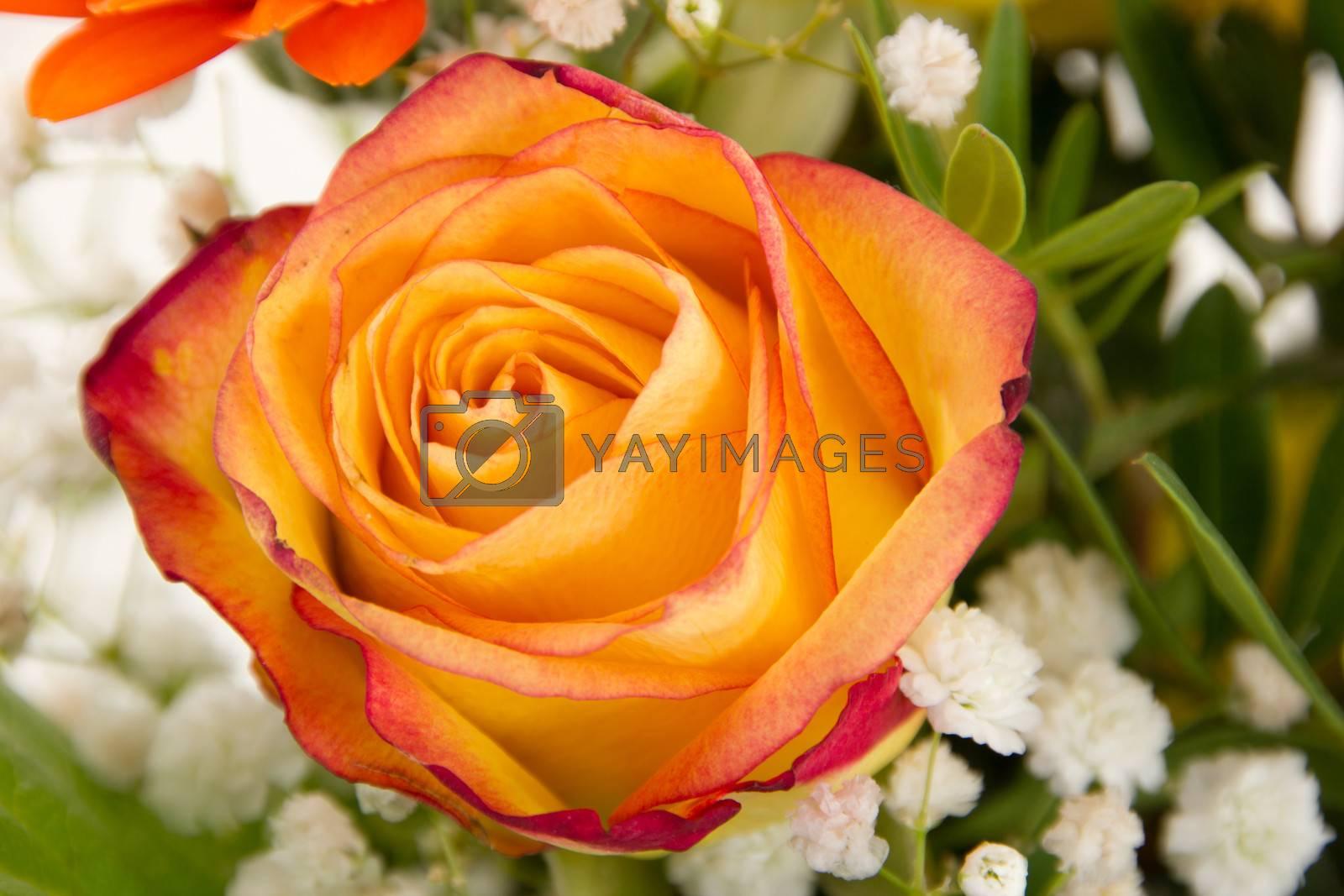 Red orange rose in beautiful bouquet
