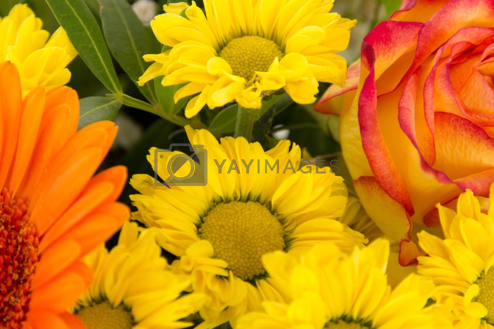 Cutout of beautiful and colorful bouquet