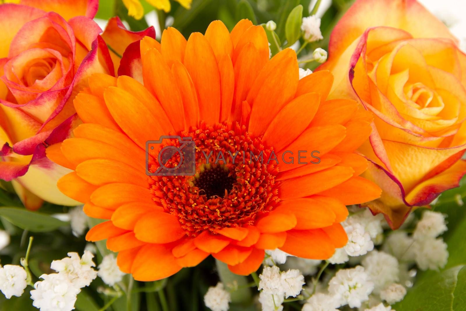 Beautiful gerbera and roses in colorful bouquet