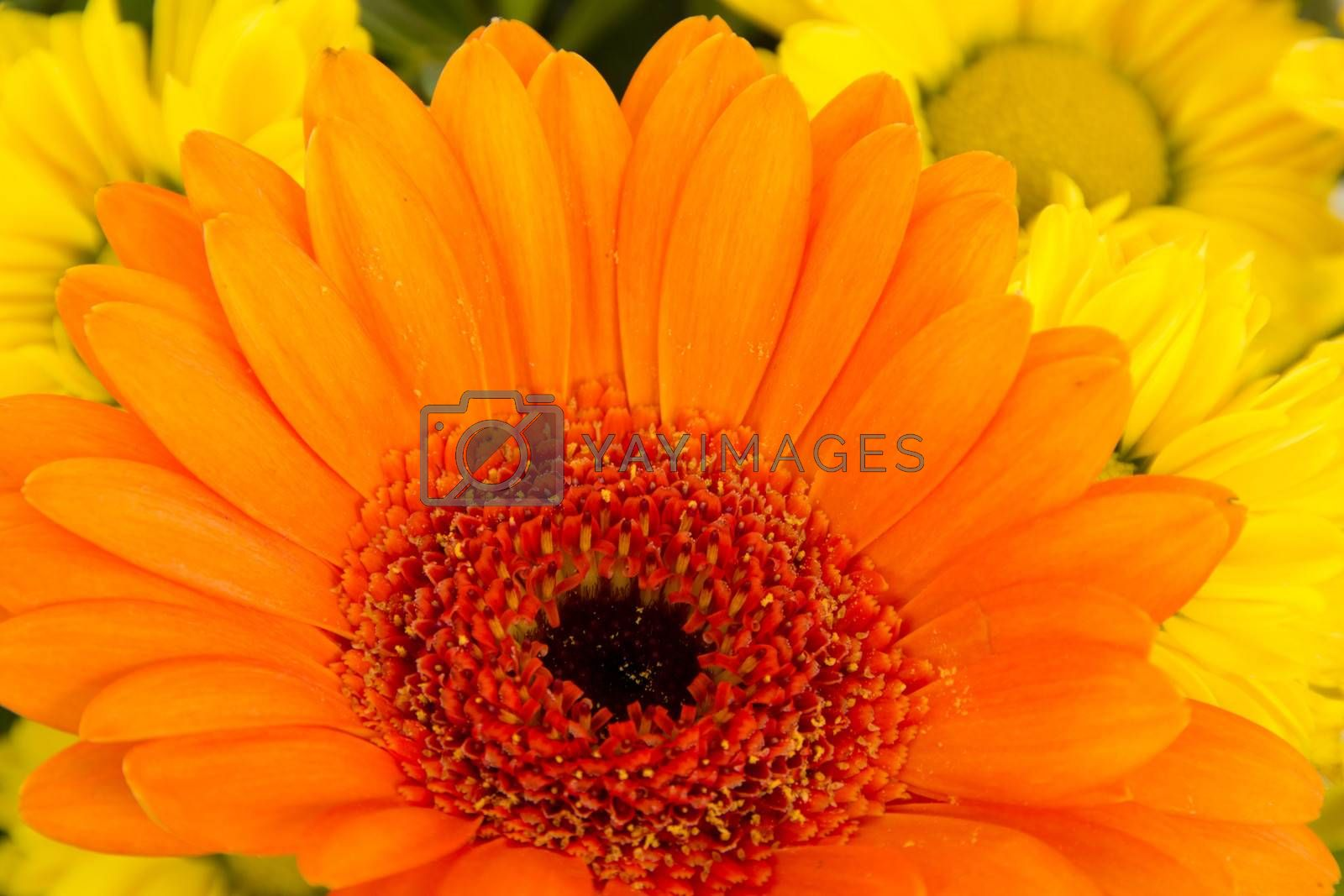 Close-up of beautiful and colorful flowers