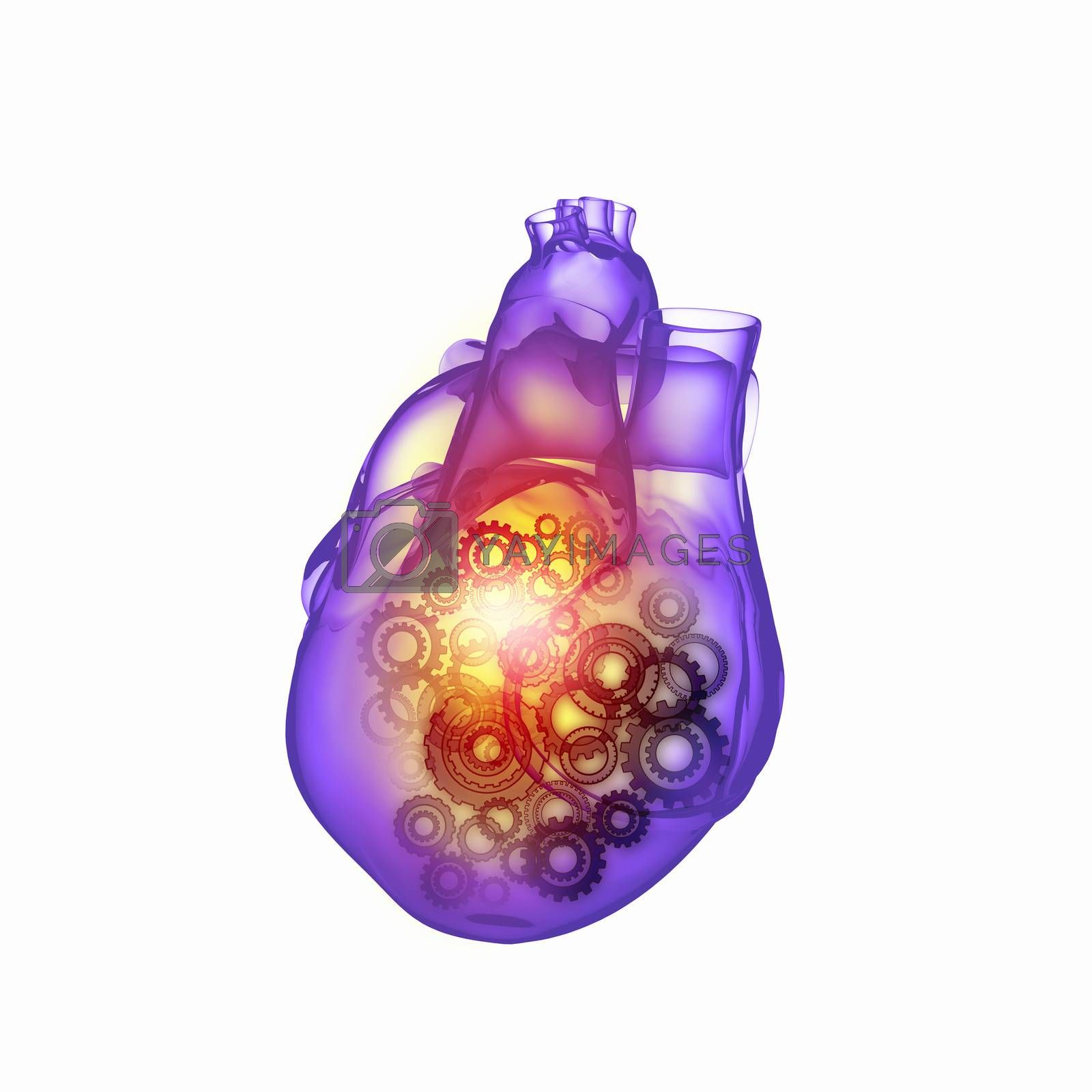 Human heart by Sergey Nivens