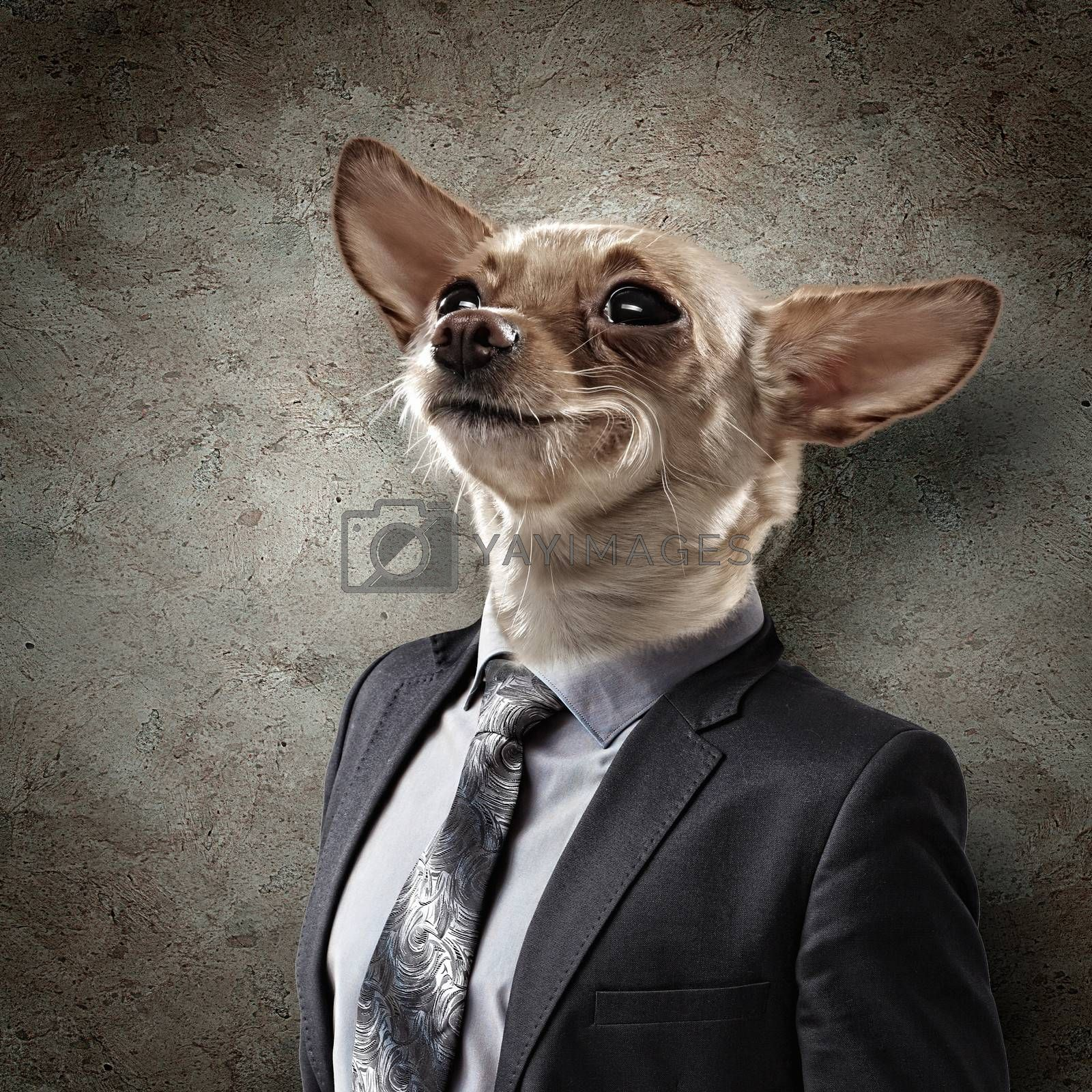 Funny portrait of a dog in a suit on an white background. Collage.