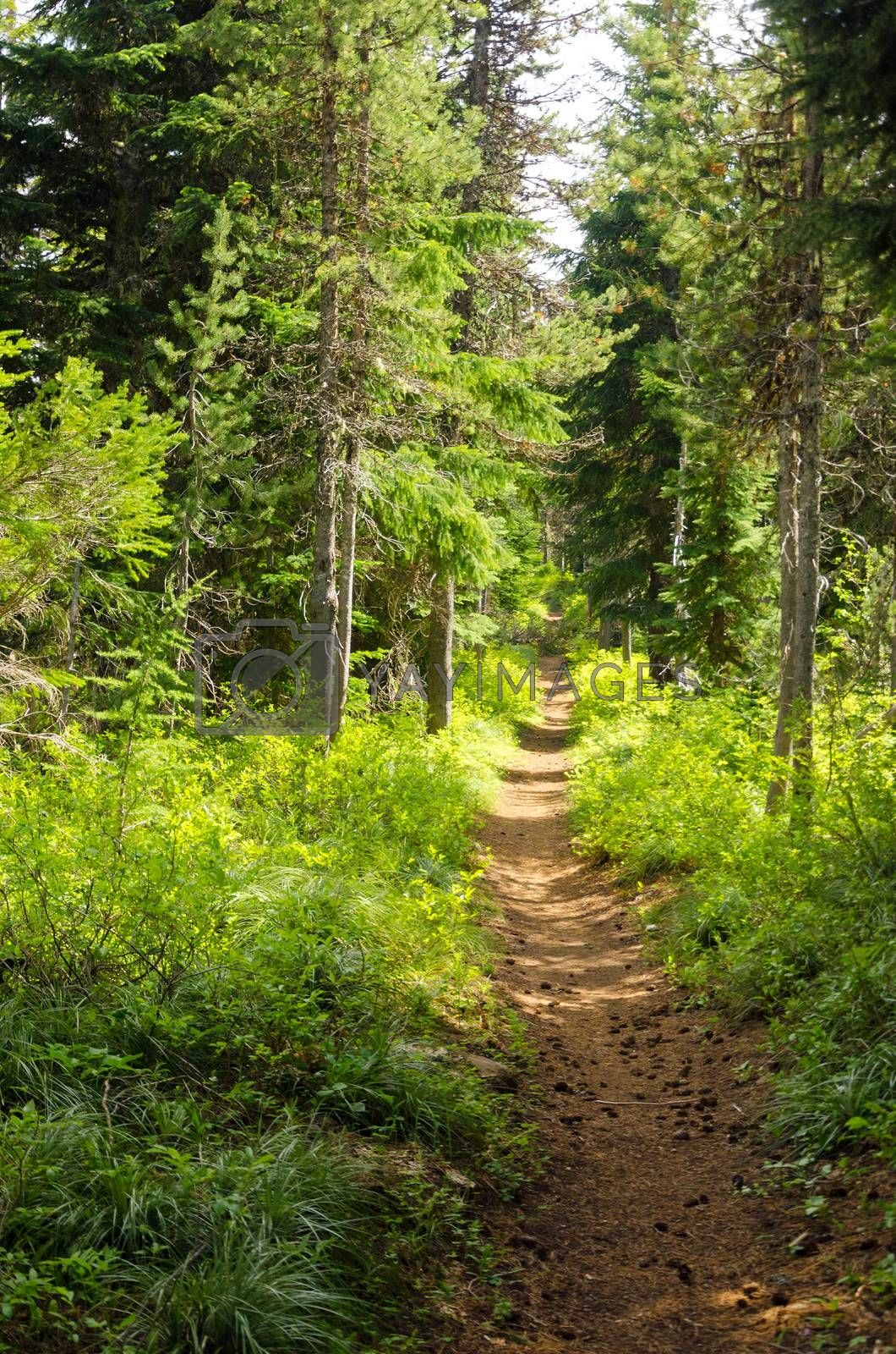 Trail passing through a lush green forest in Oregon