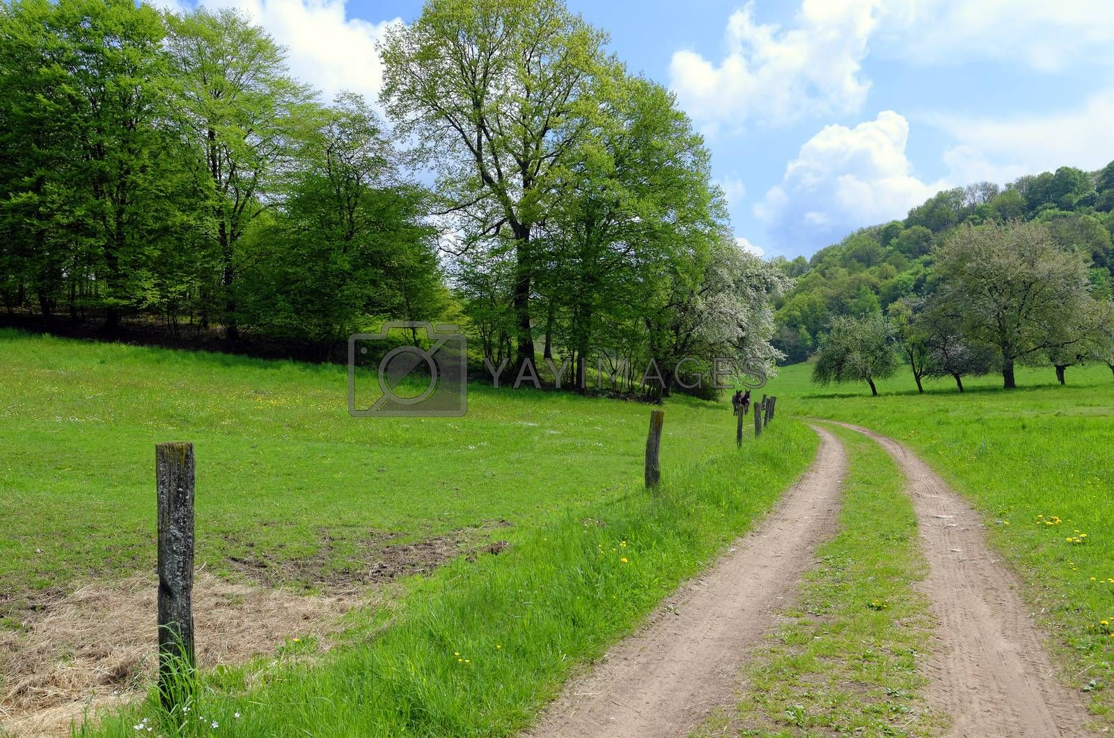 countryside lane and green pasture