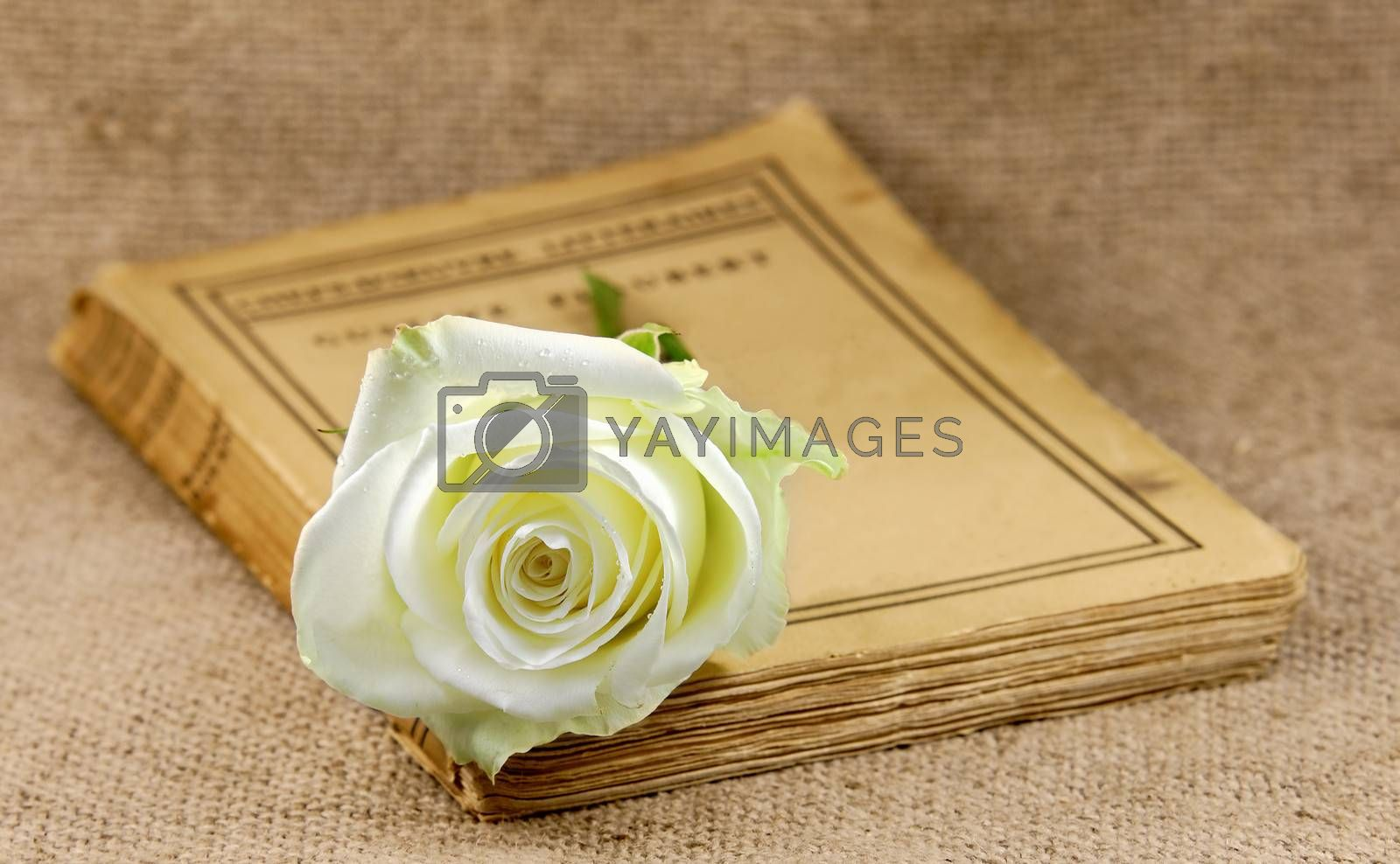 old book covered with a white rose
