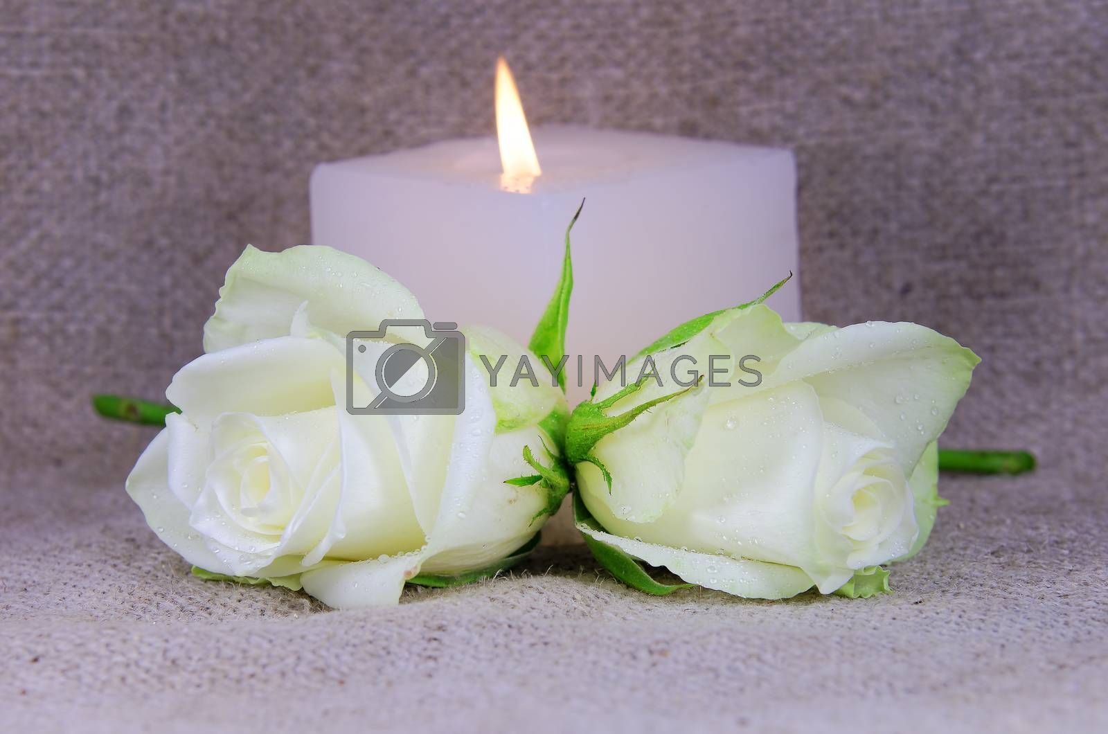 two roses and candle in the background