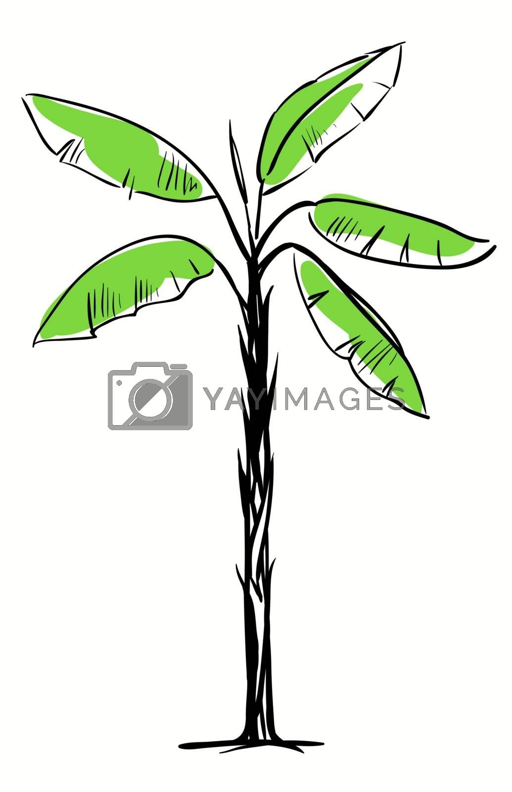 Tropical Palm Tree Isolated on White Background, Vector Illustration