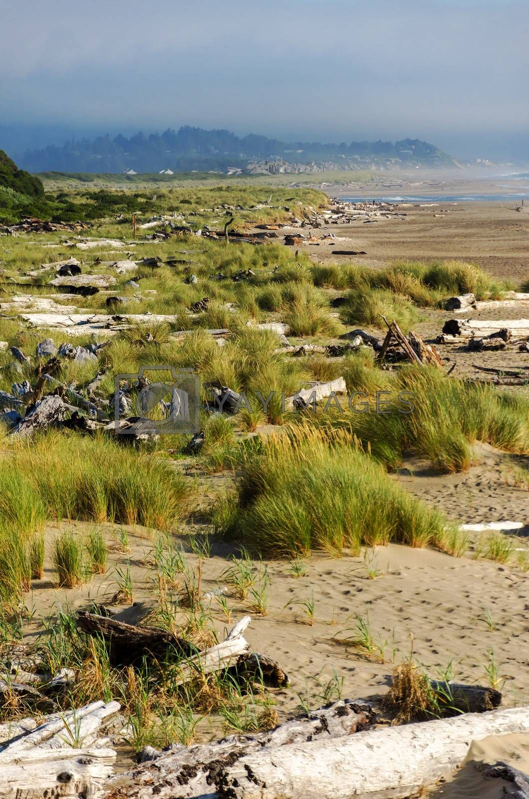 View of the Oregon coast at Lincoln City with grass and driftwood