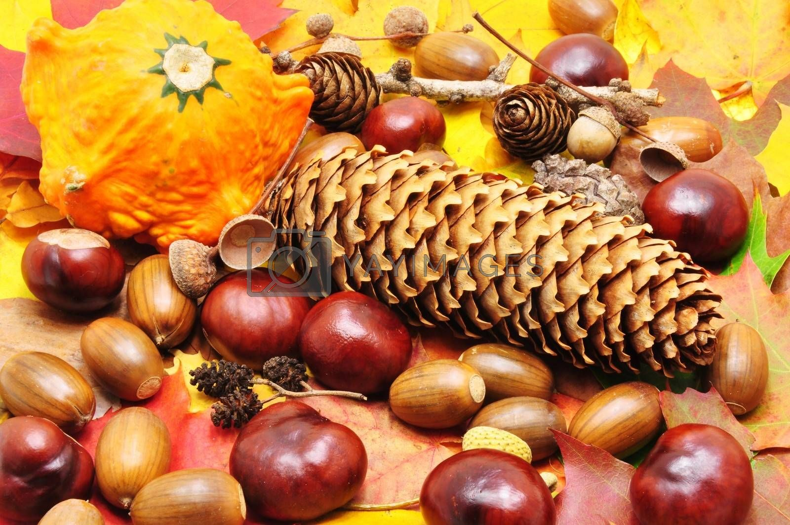 Colorful autumn background made up of chestnuts, acorns, pinecones ...