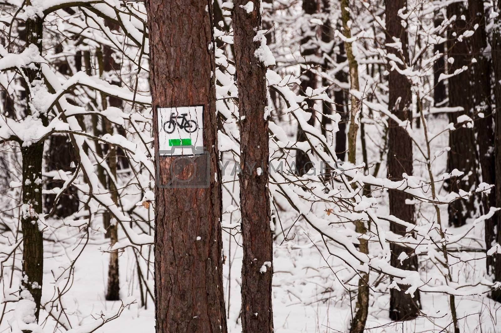 Bike route sign on the tree in winter.