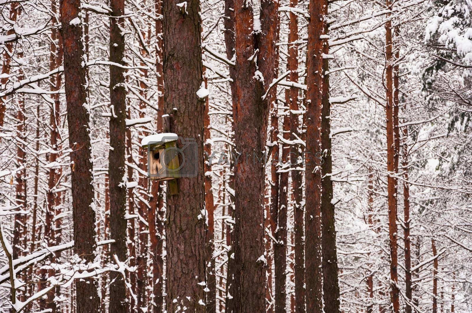 Feeder on the tree in winter.