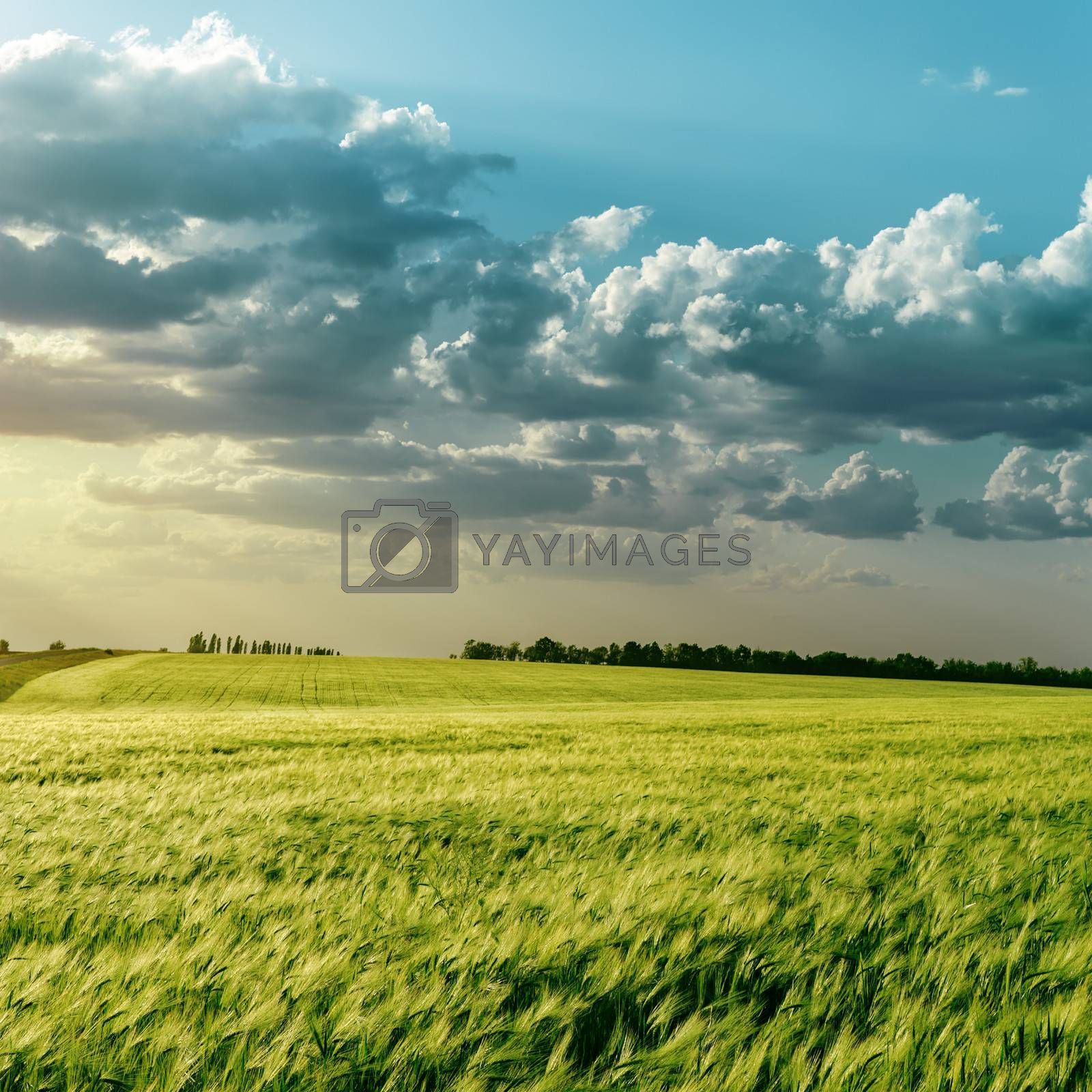 green field and clouds over it in sunset