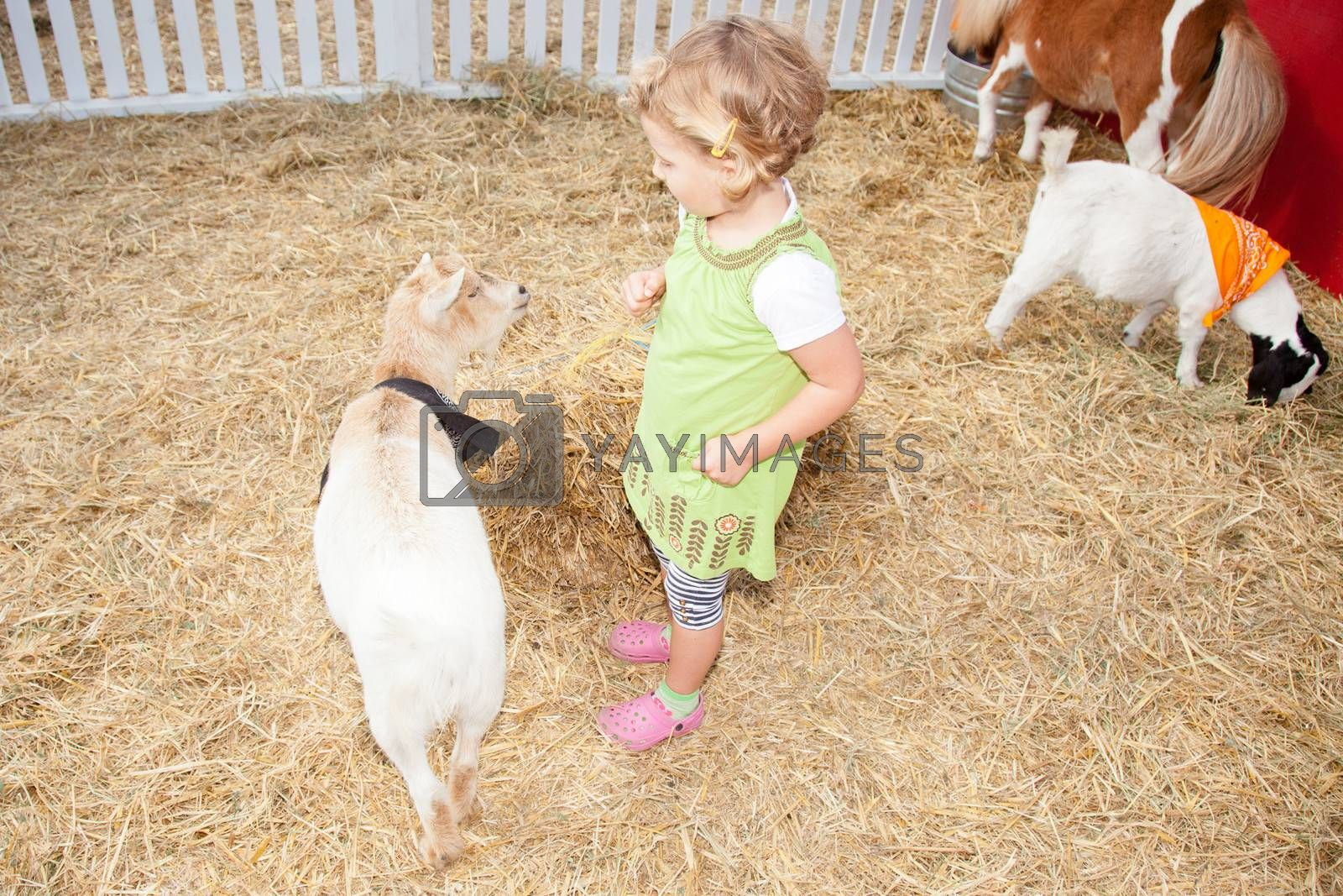 Playing with animals in petting zoo on a pumpkin patch.