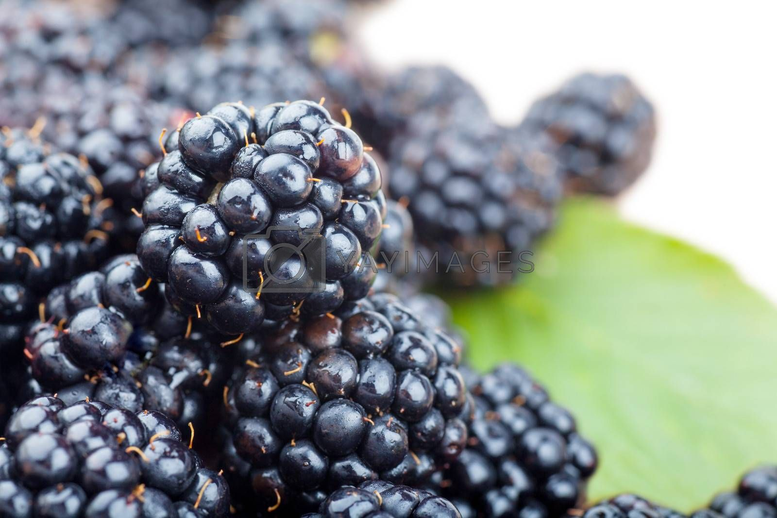 Macro view of fresh ripe blackberries