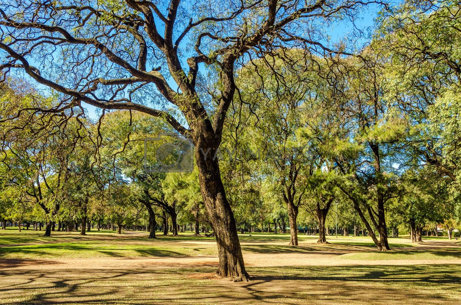 A park full of trees in Buenos Aires, Argentina