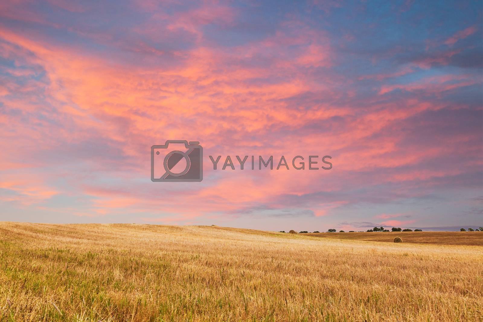 Beautiful sunset over field. Alentejo, Portugal