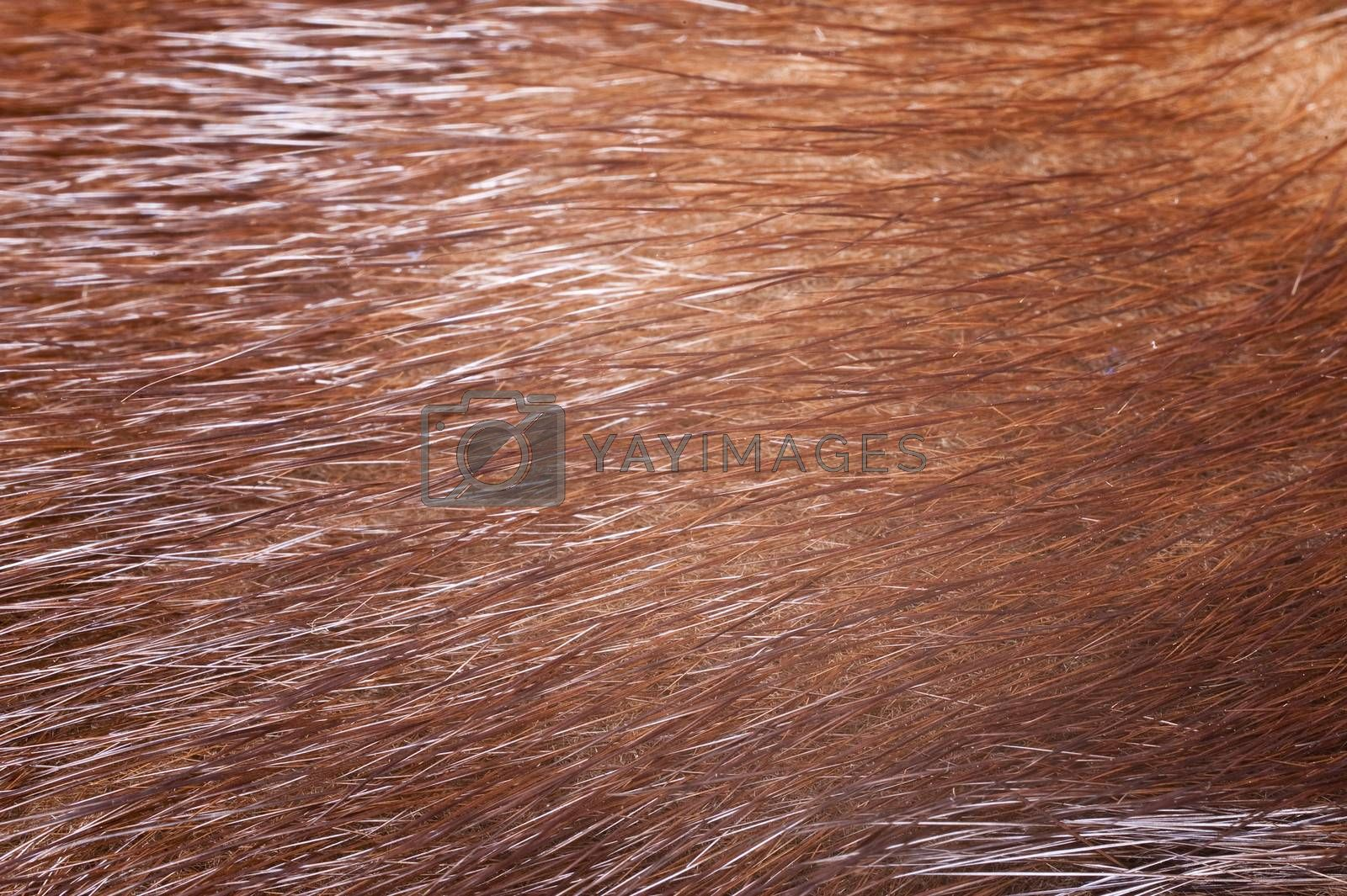 Close up of brown fur