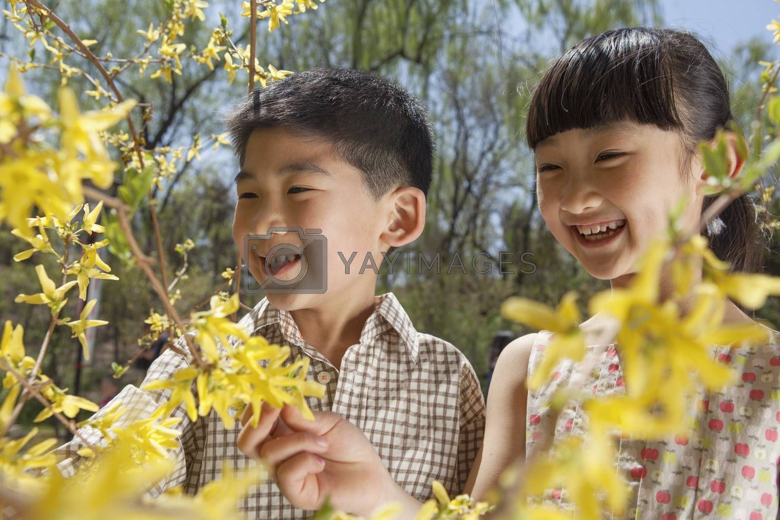 Smiling young boy and girl looking at the yellow blossoms on the tree in the park in springtime