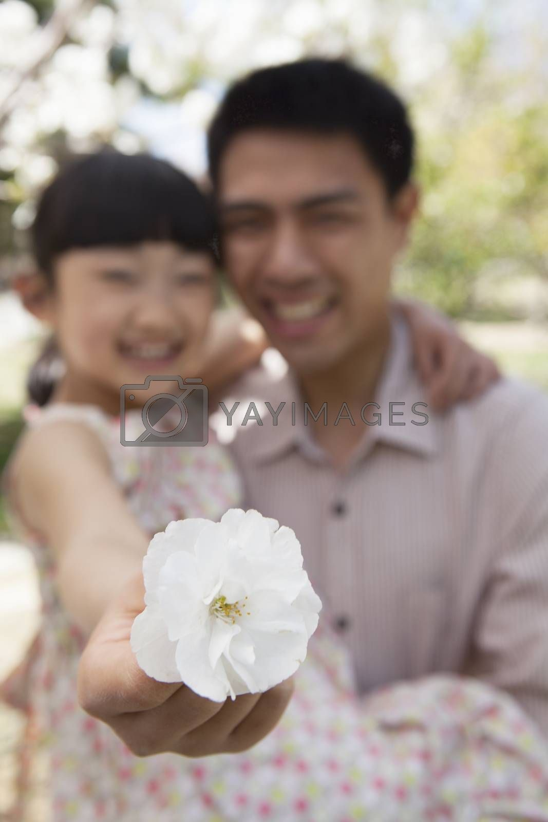Daughter holding a cherry blossom close to the camera with her father in the park in springtime