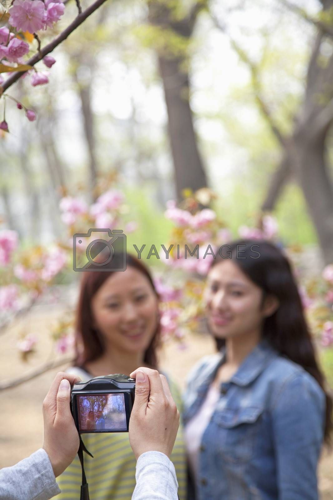 Person taking a photo of two young women outdoors in a park among the spring blossoms