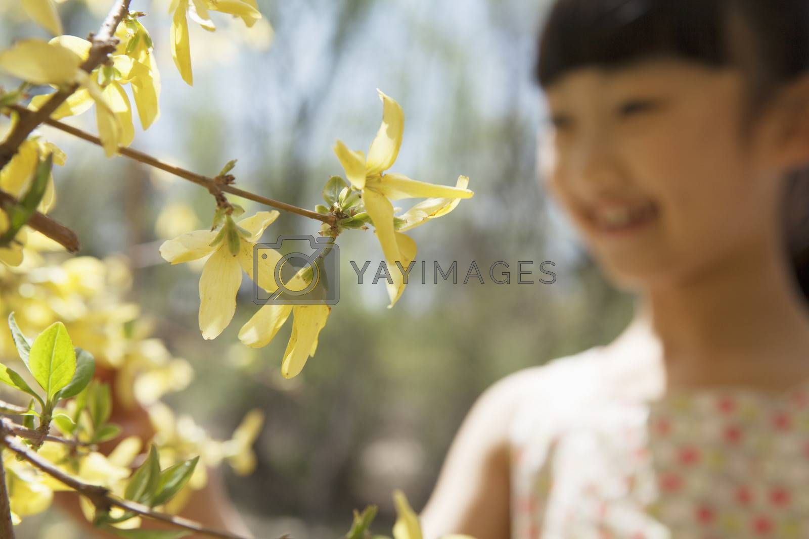 Smiling young girl looking at the yellow blossoms on the tree in the park in springtime
