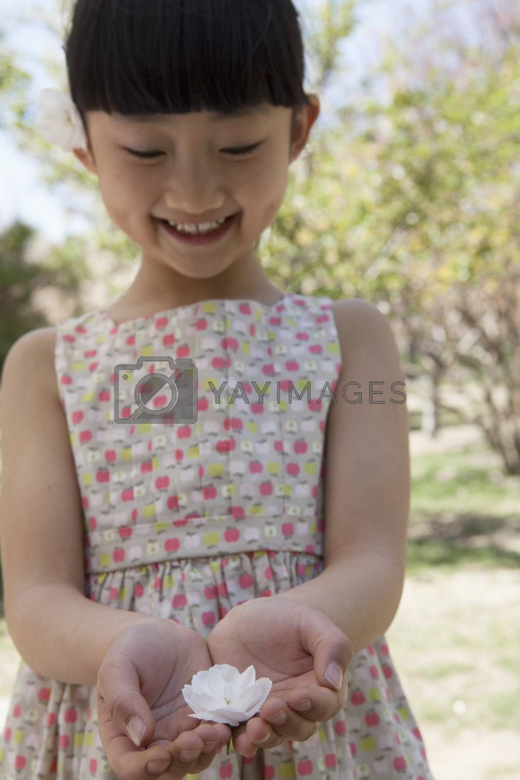 Little smiling girl looking down at a cherry blossom in her cupped hands in a park in springtime