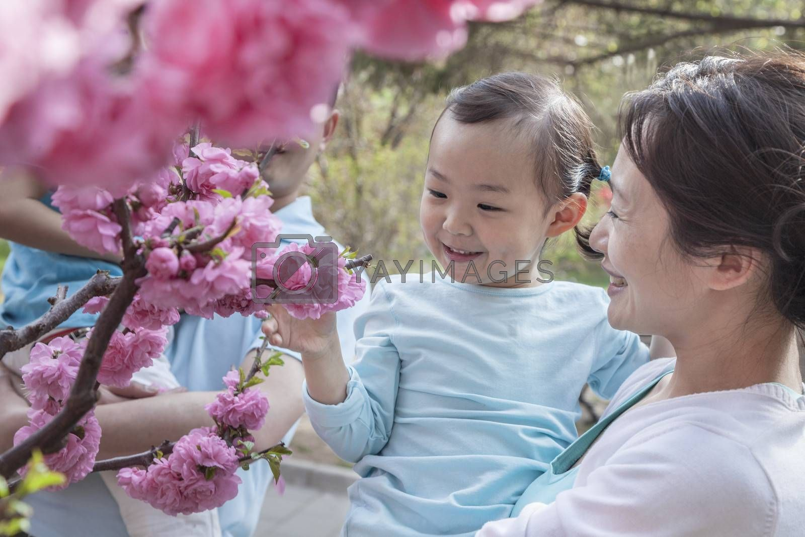 Mother holding daughter and looking at cherry blossoms.