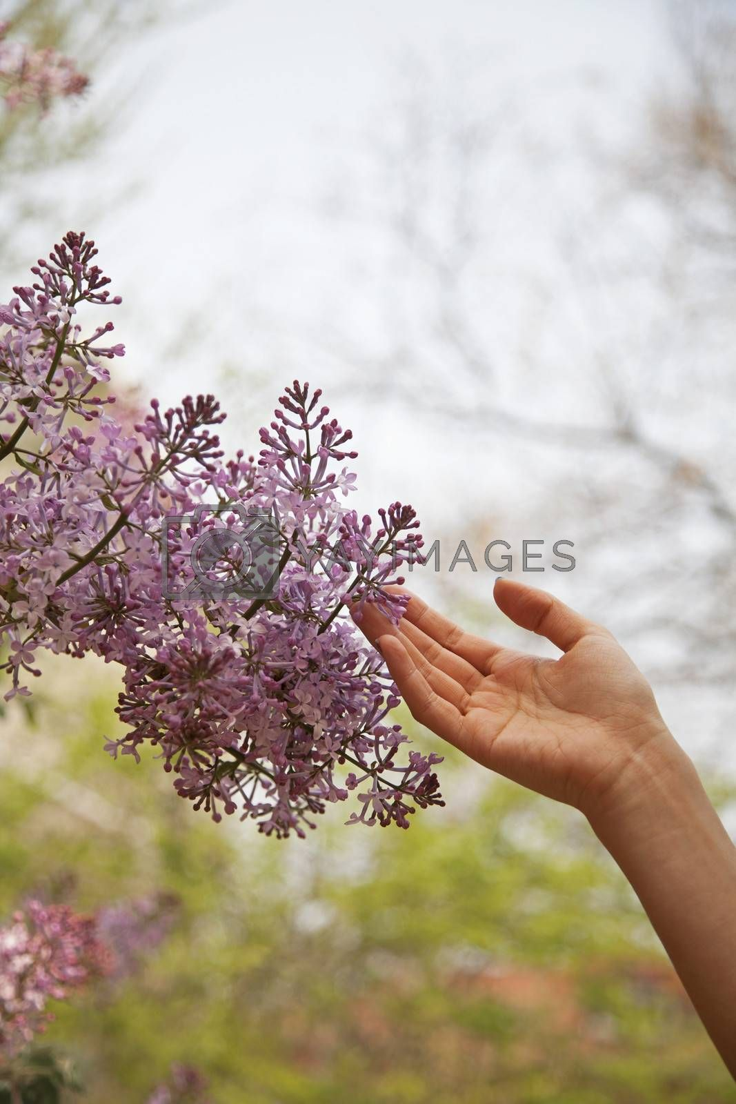 Close up of hand touching flower blossom, outside in the park in springtime