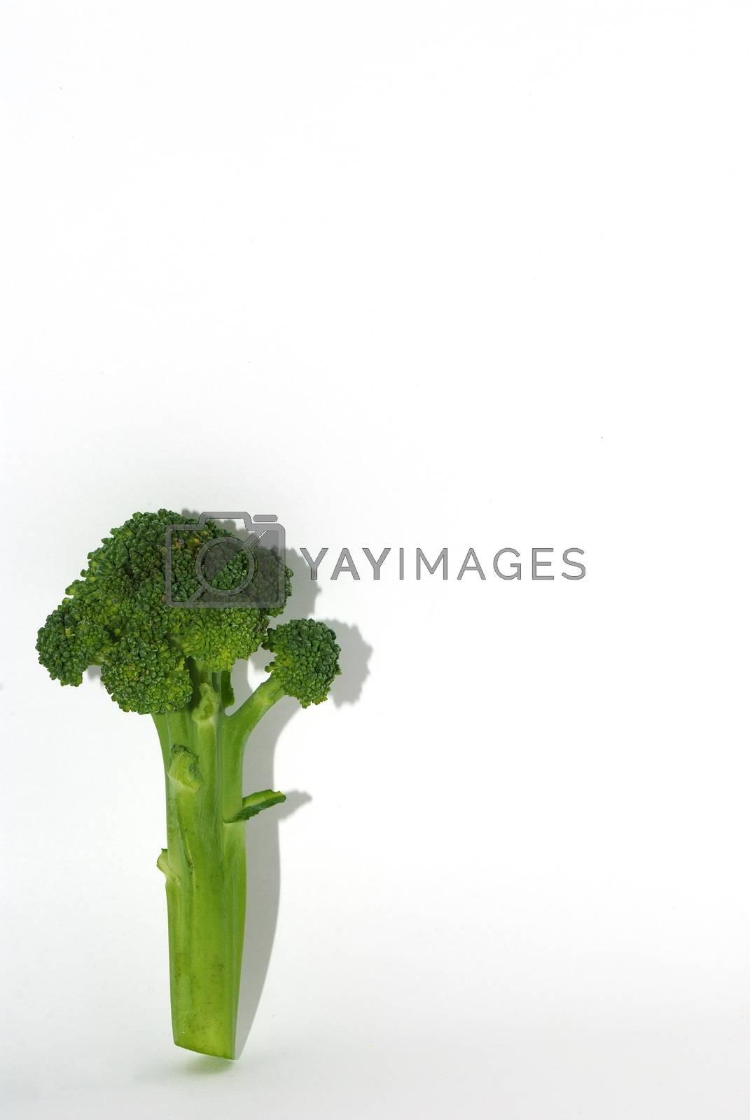 fresh green healthy vegetable brokoli portrait with shadow on white background
