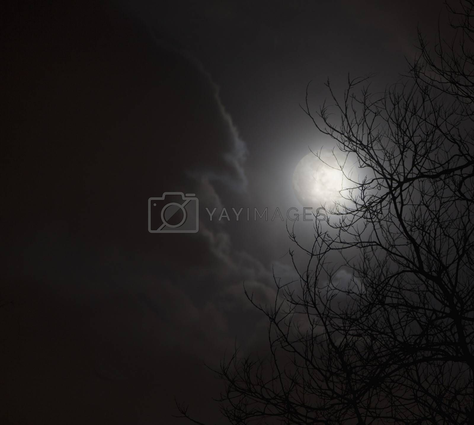 Full moon in night sky with clouds and silhouette of trees.