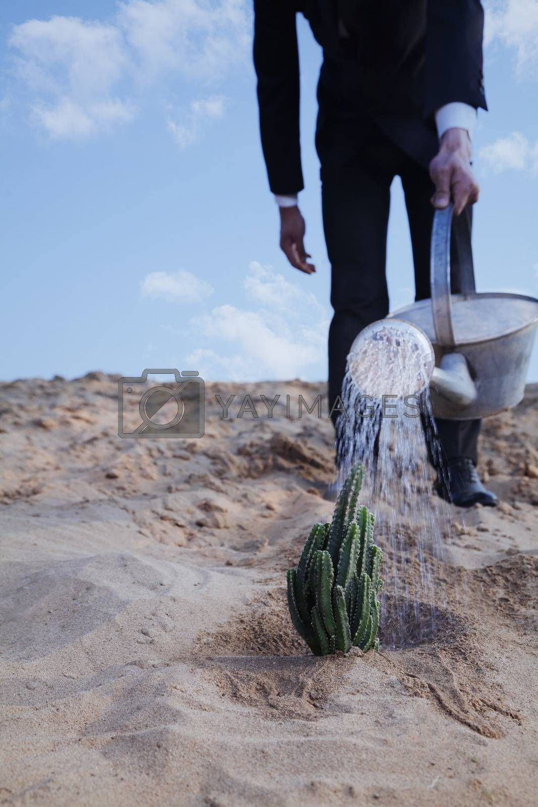Close-up of young businessman watering a cactus in the desert