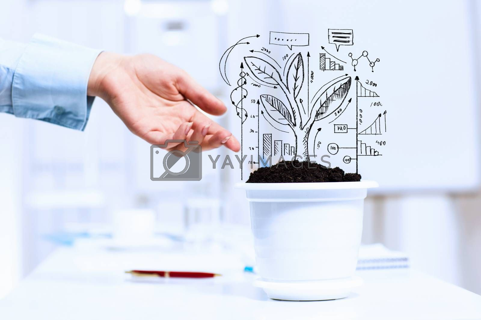 Close-up image of human hand and pot with money tree