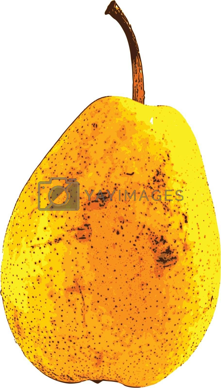 photorealistic, vector, traced illustration of pear