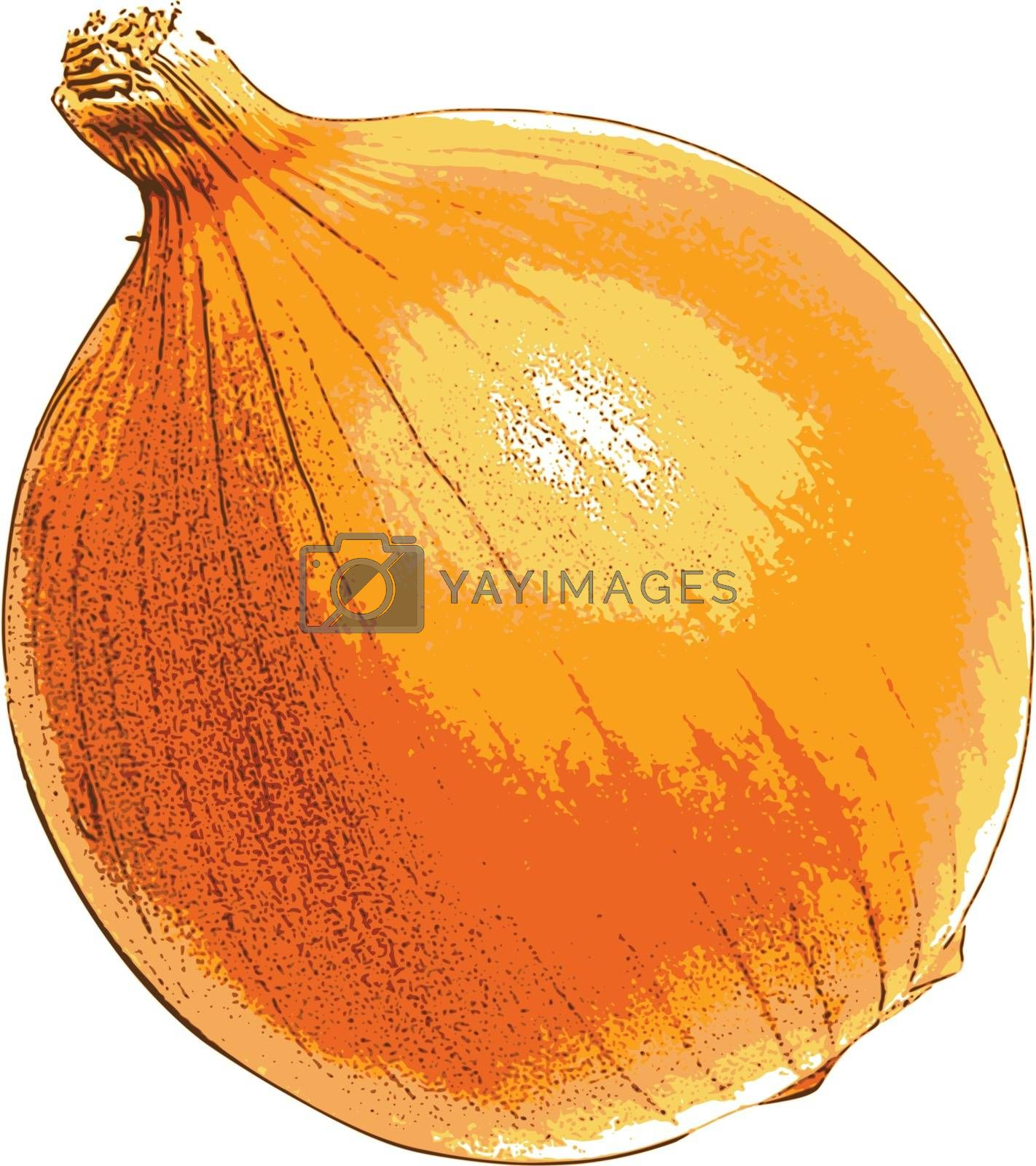 photorealistic, vector, traced illustration of onion