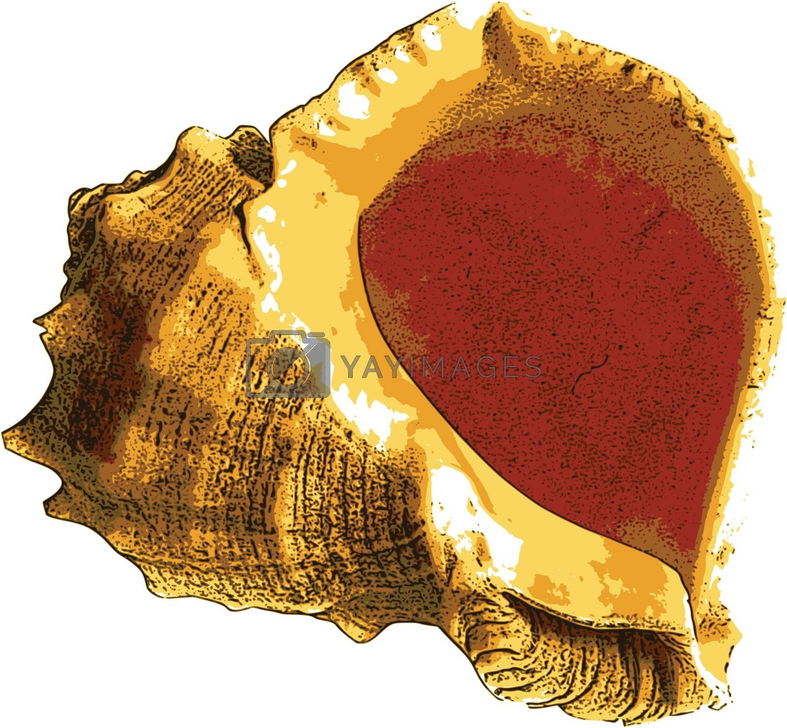 photorealistic, vector, traced illustration of sea shell